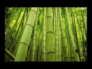 SILICE DE BAMBOU :Le champagne des aliments verts