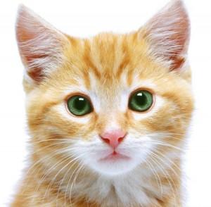 LE SILICIUM ORGANIQUE un réel bienfait pour nos animaux